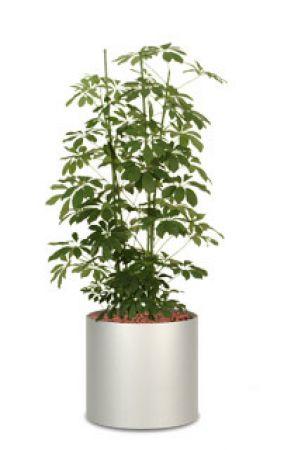 Mobelimperium Yucca Aloifolia Planzen Blumen Buropflanzen